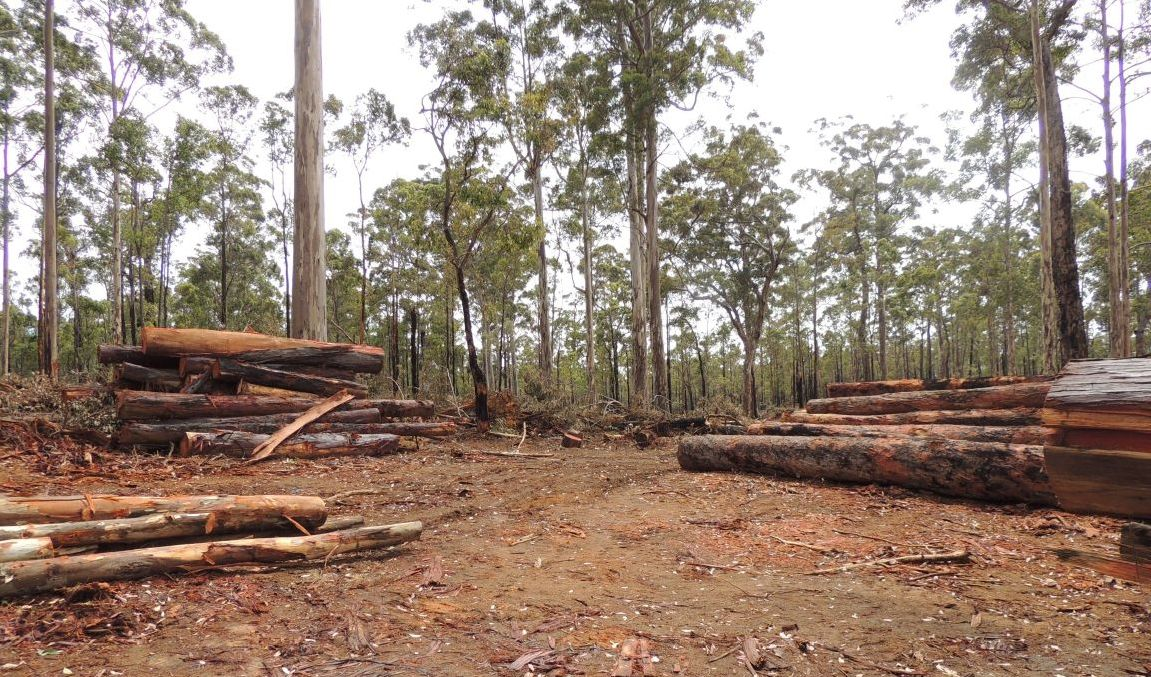 Clear Felling in WA's Challar Forest