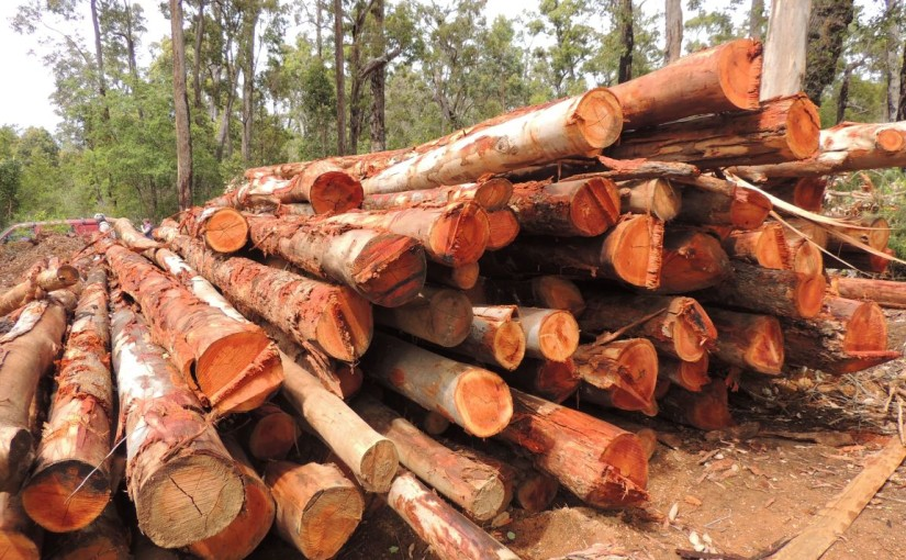 Logging in WA's South West