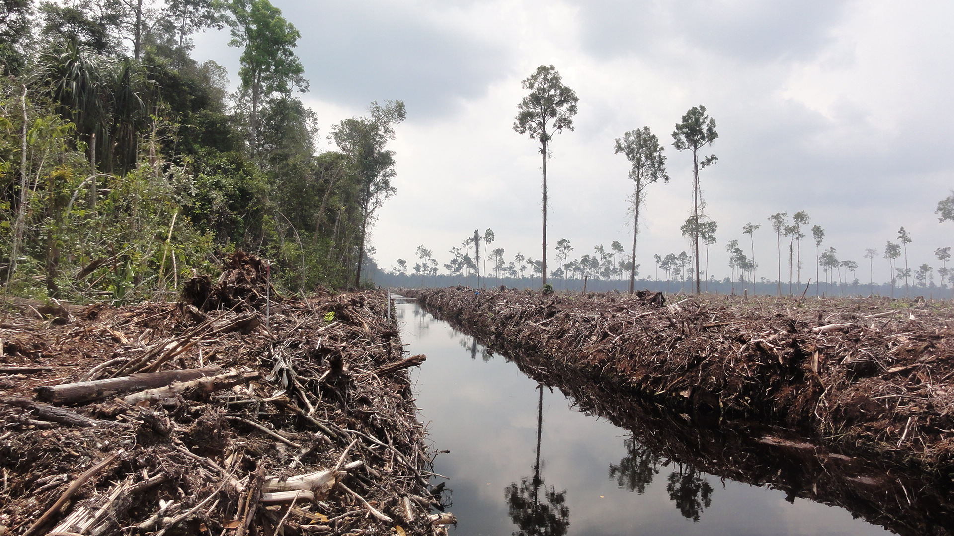 destruction of the amazon rainforest essay